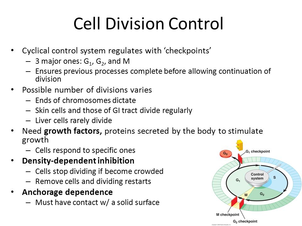 cell division Cell division is characterised by the segregationof genetic material and the redistribution of cellular contents facilitated by the cytoskeleton.