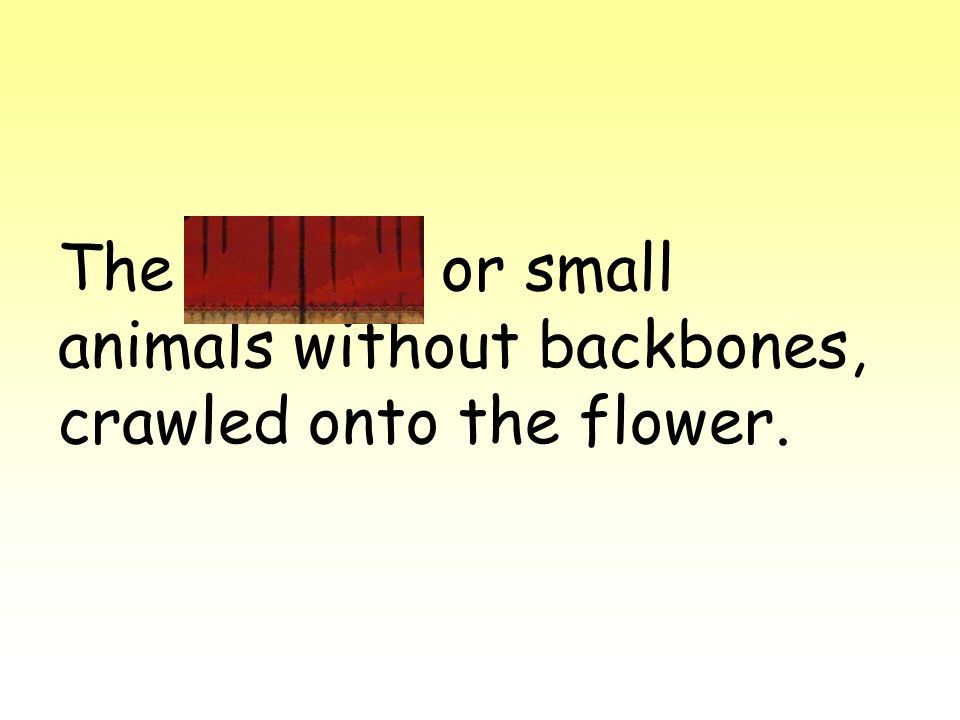The insects, or small animals without backbones, crawled onto the flower.