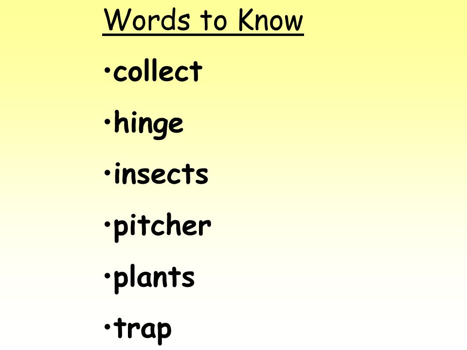 Words to Know collect hinge insects pitcher plants trap