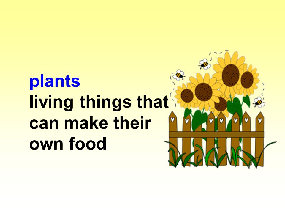 plants living things that can make their own food