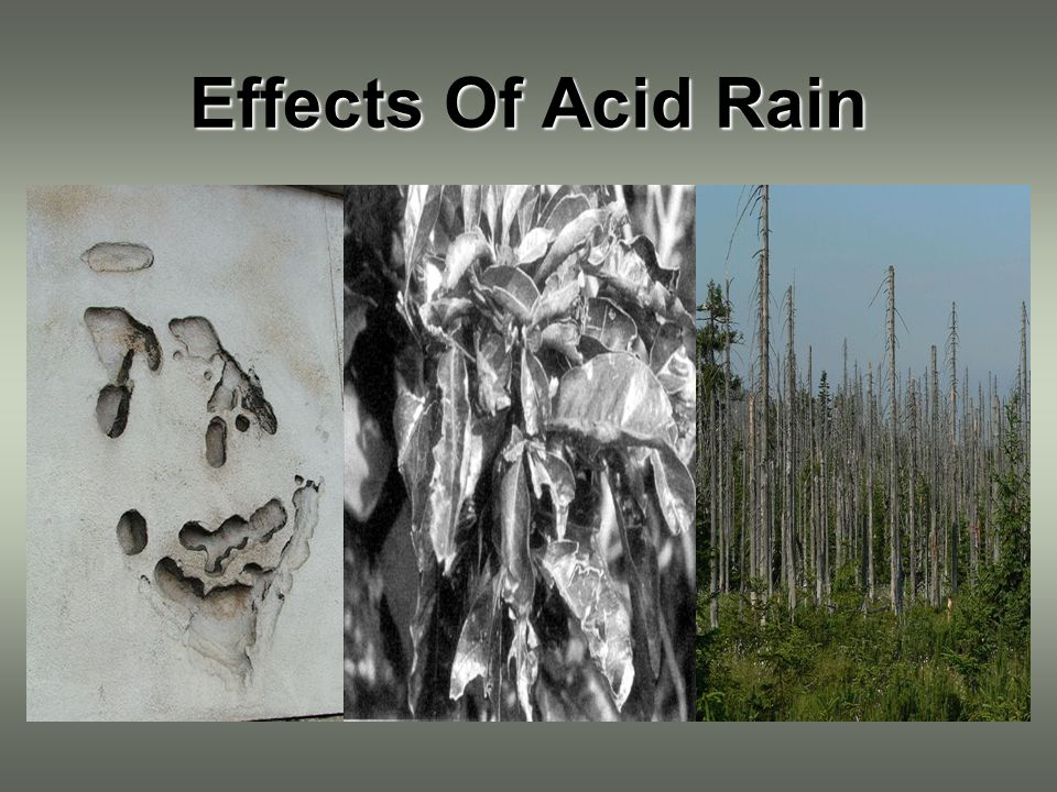 the effects of acid rain An overview of acid rain and its history, causes, and effects as well as solutions to this environmental problem.