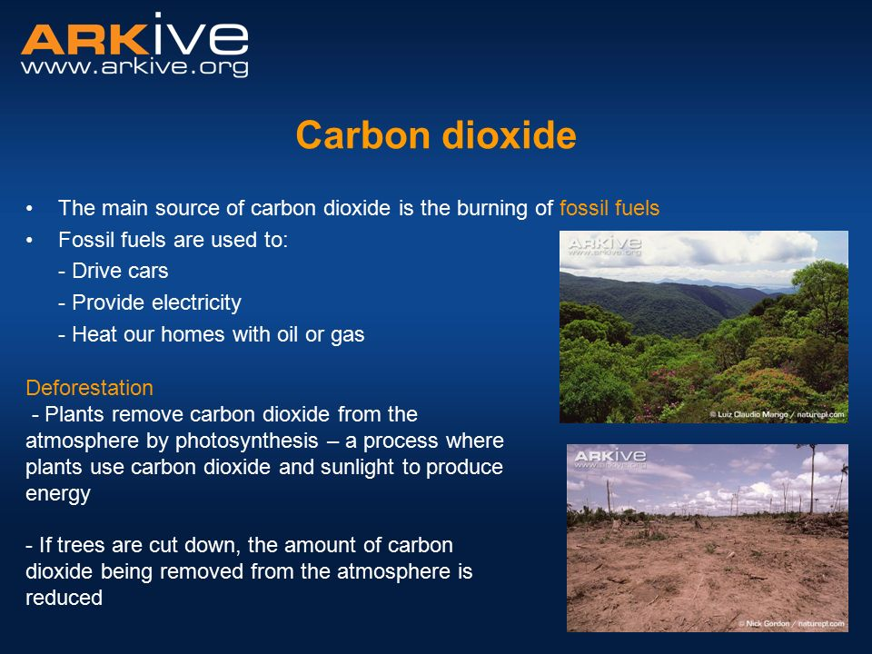 the amount of carbon dioxide essay Summary this research essay explains why it is important to reduce emissions caused by carbon dioxide and other greenhouse gases and avoid the costs originated by them in the near future australia is severely impacted by global climate change.