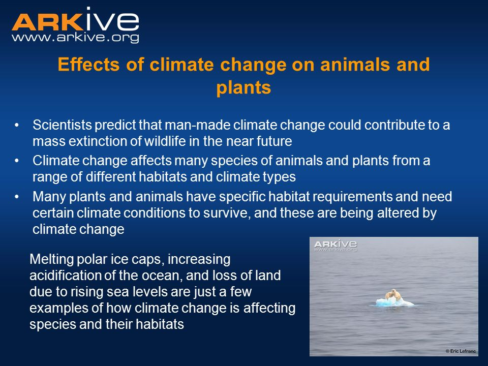 pdf of food effects by rising sea levels
