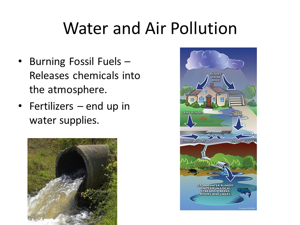 Ecology. - ppt video online download