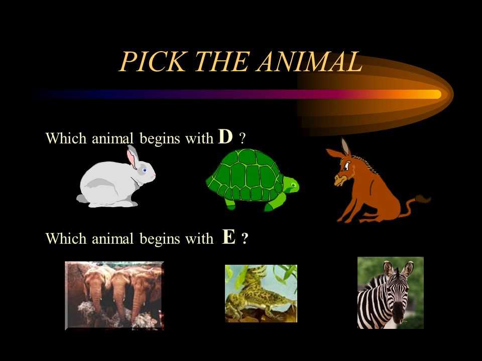PICK THE ANIMAL Which animal begins with D