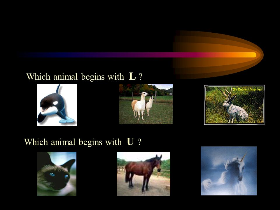 Which animal begins with L