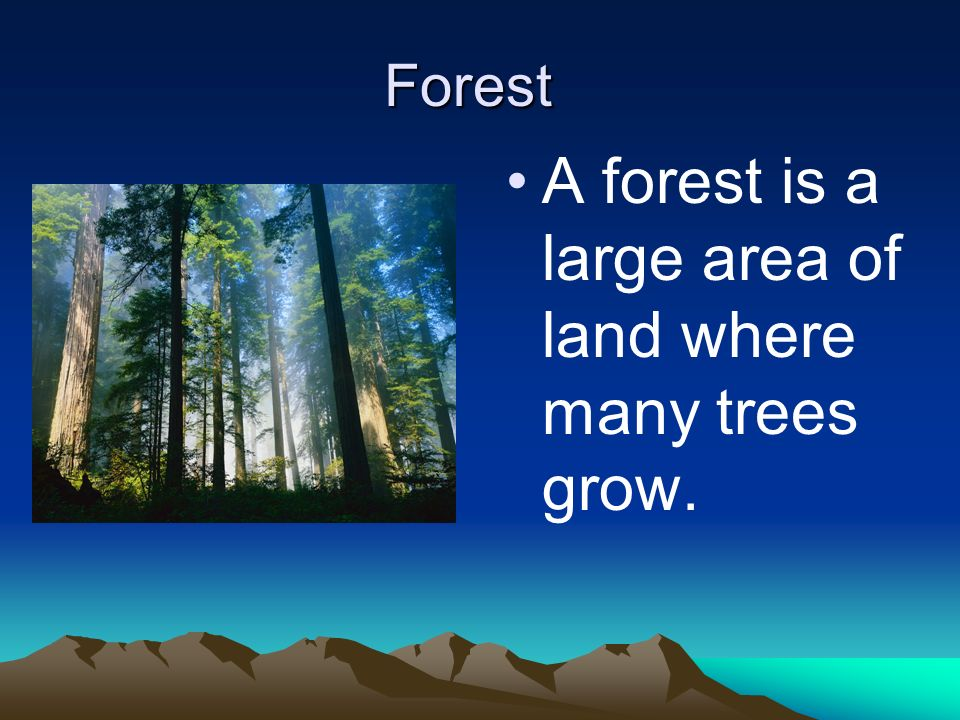 A forest is a large area of land where many trees grow.