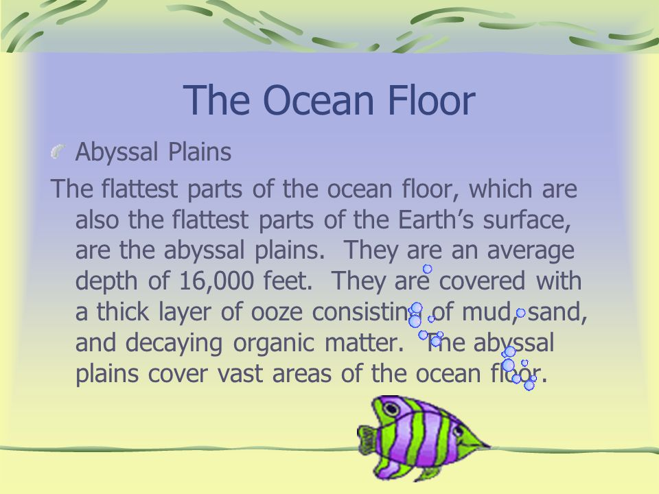 The Ocean Floor Abyssal Plains