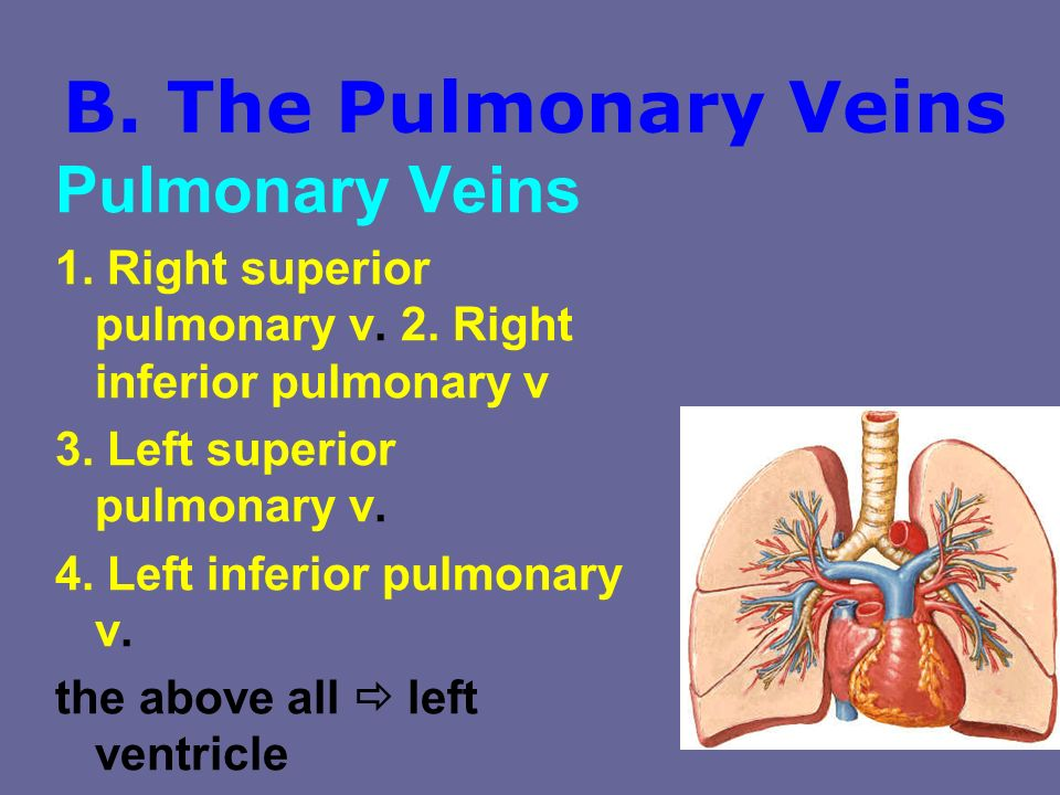 B. The Pulmonary Veins Pulmonary Veins