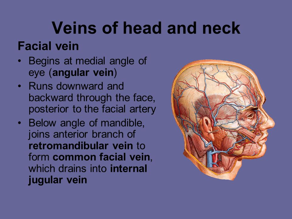 Veins of head and neck Facial vein