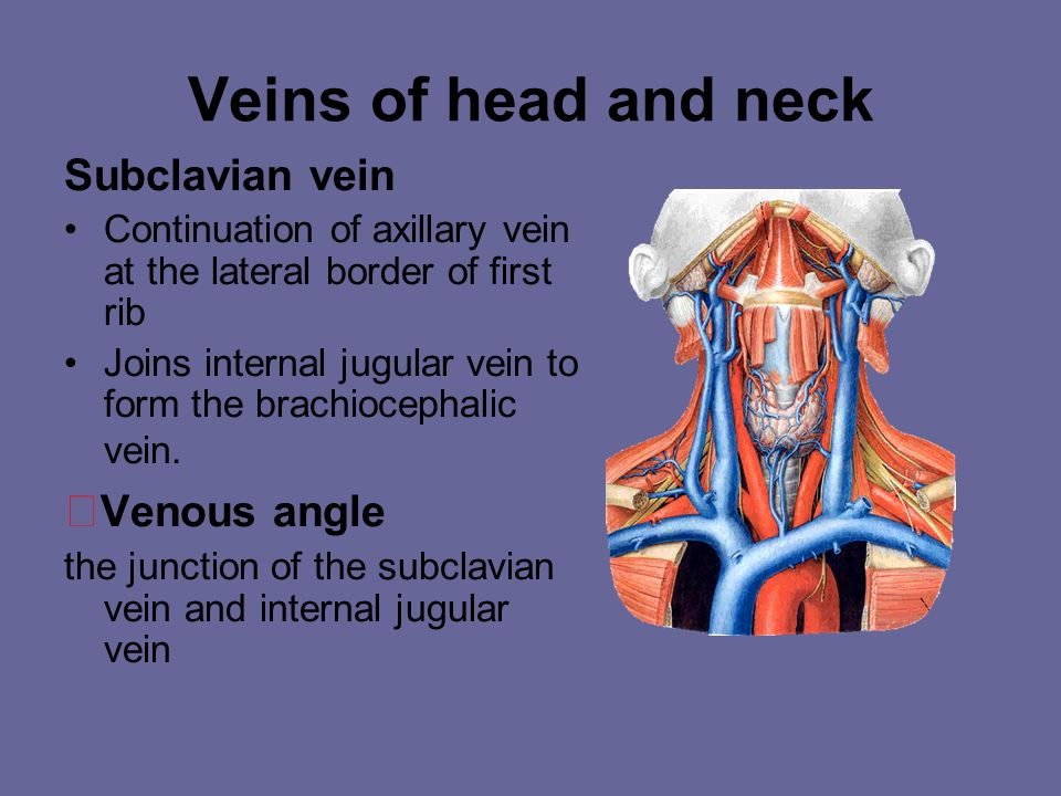 Veins of head and neck ★Venous angle Subclavian vein