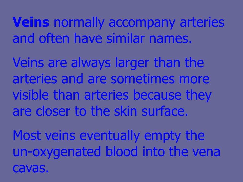 Veins normally accompany arteries and often have similar names.