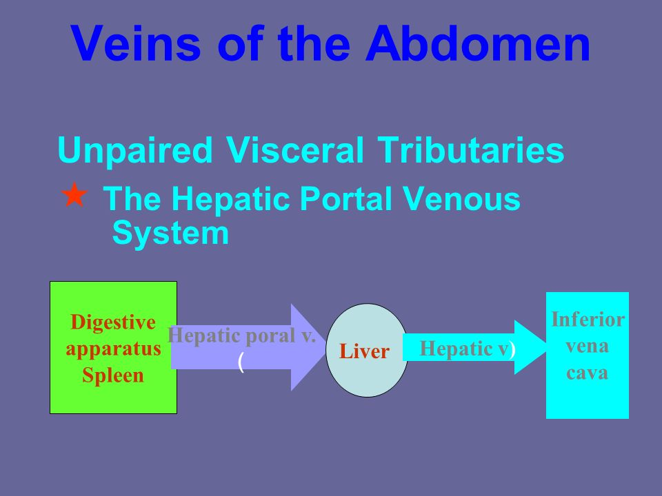 Veins of the Abdomen  The Hepatic Portal Venous System