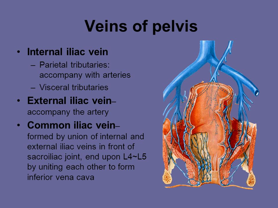 Veins of pelvis Internal iliac vein