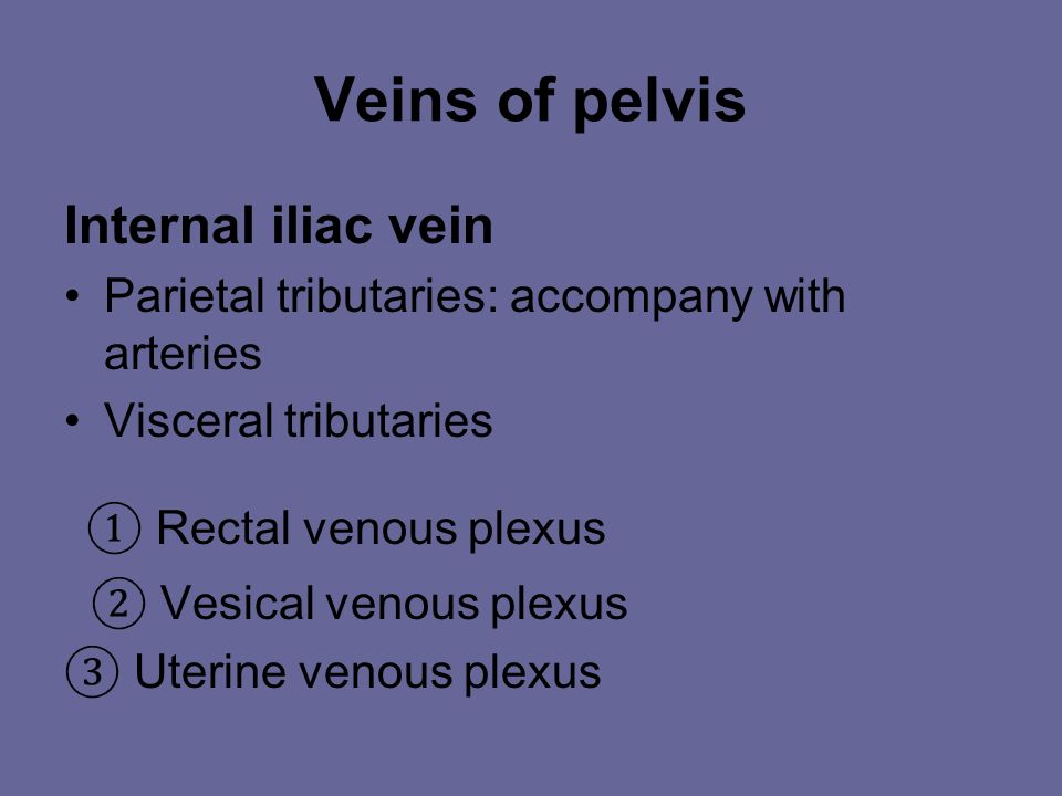 ① Rectal venous plexus Veins of pelvis Internal iliac vein