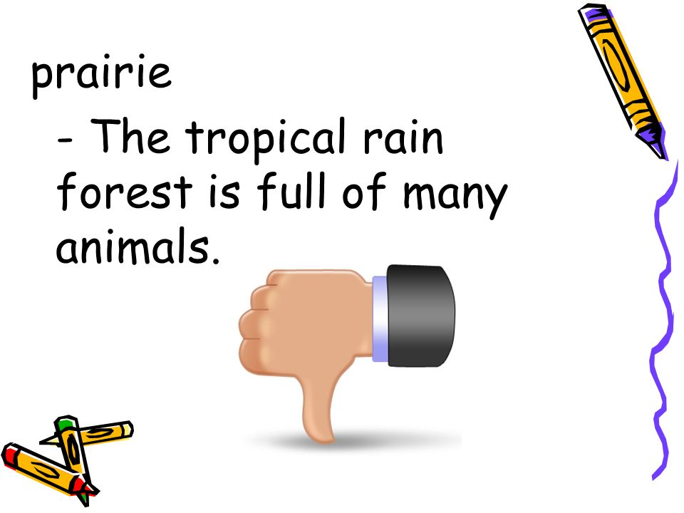 prairie - The tropical rain forest is full of many animals.