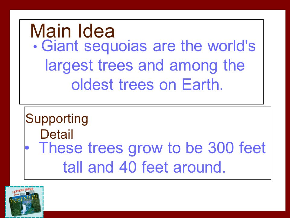 Main Idea largest trees and among the oldest trees on Earth.