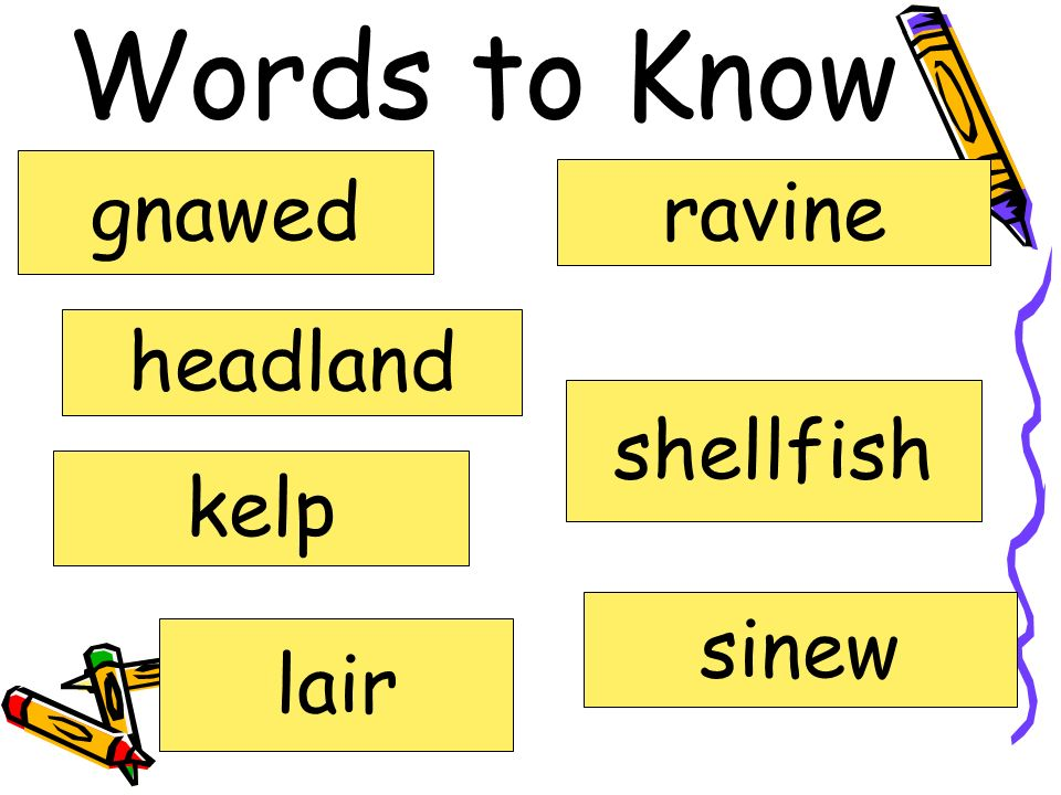 Words to Know gnawed ravine headland shellfish kelp sinew lair