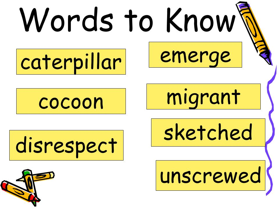 Words to Know emerge caterpillar migrant cocoon sketched disrespect