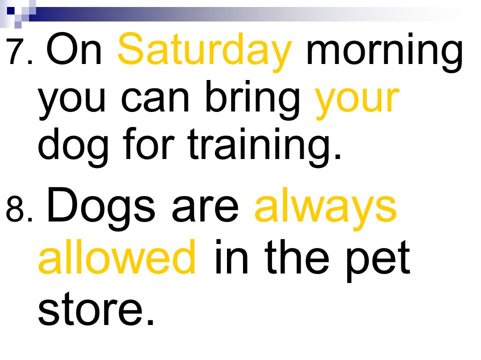 7. On Saturday morning you can bring your dog for training.