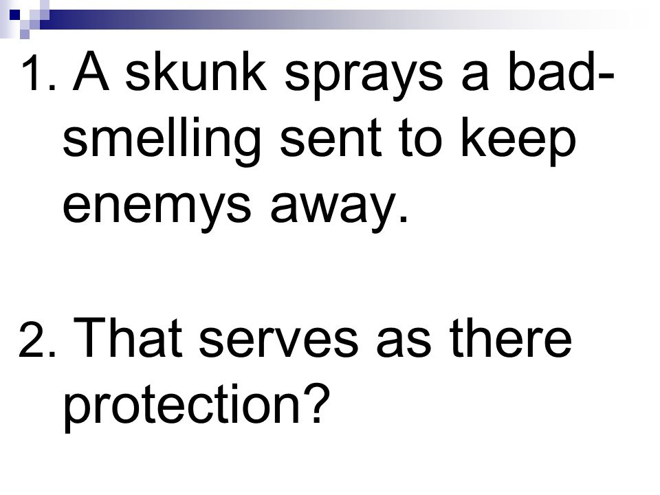 1. A skunk sprays a bad-smelling sent to keep enemys away.