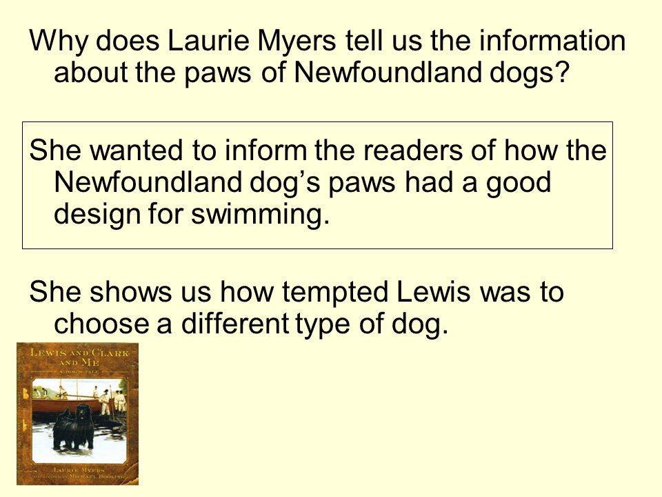 Why does Laurie Myers tell us the information about the paws of Newfoundland dogs