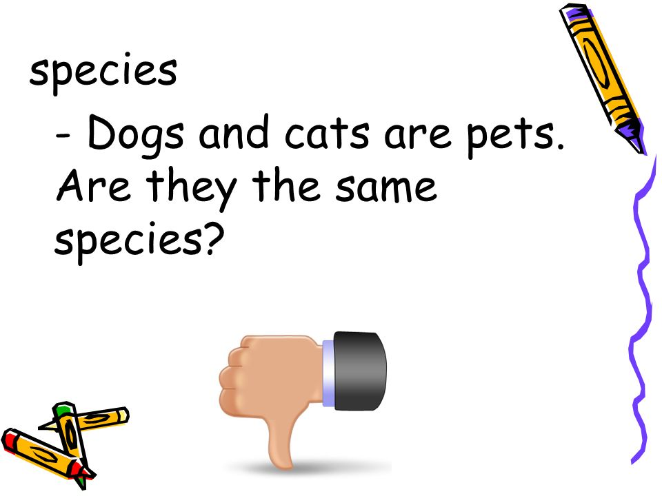 species - Dogs and cats are pets. Are they the same species