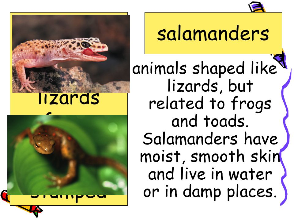 amphibians salamanders crime exhibit lizards reference reptiles