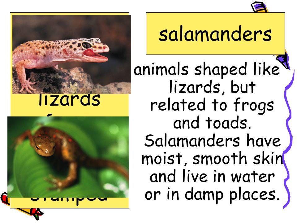 amphibians salamanders crime exhibit lizards reference reptiles