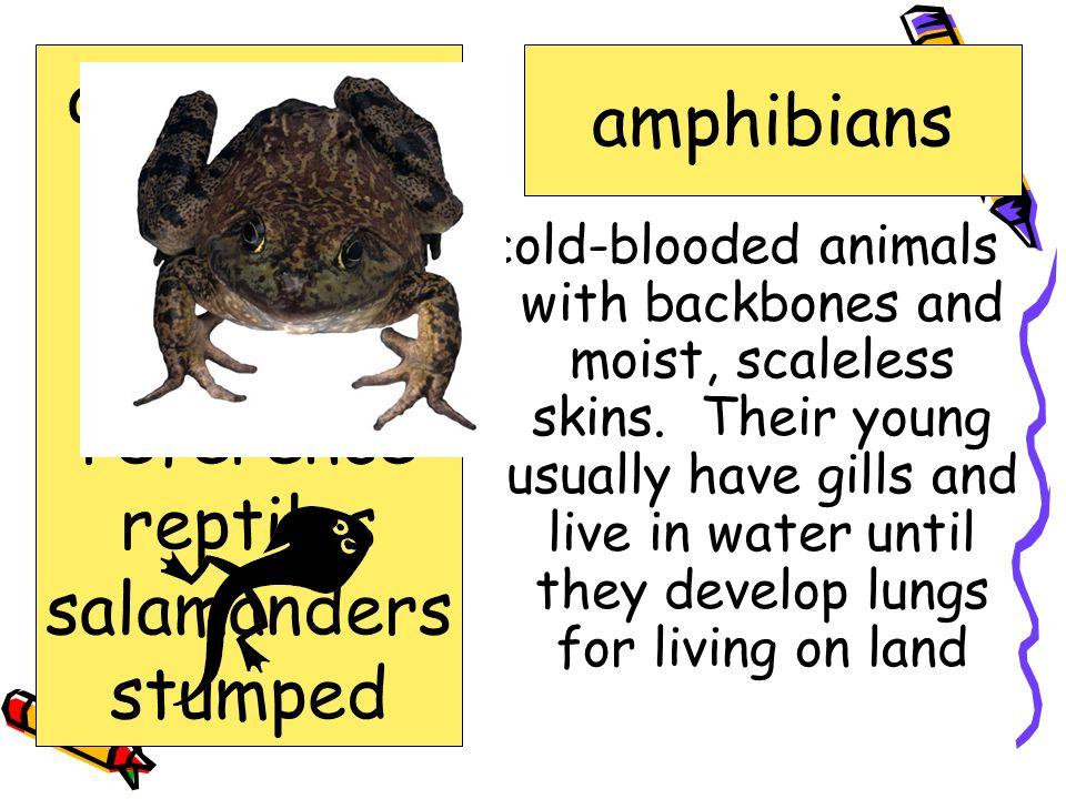 amphibians amphibians crime exhibit lizards reference reptiles