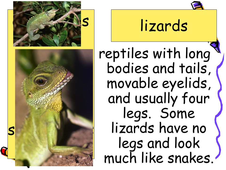 amphibians lizards crime exhibit lizards reference reptiles