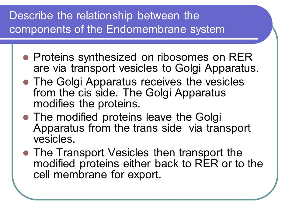 relationship between proteins and ribosomes