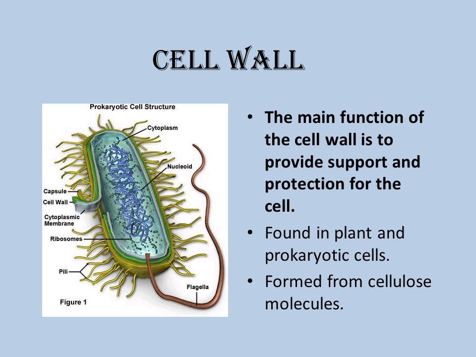 Ribosomes In A Plant Cell Cell Unit Learning Goa...