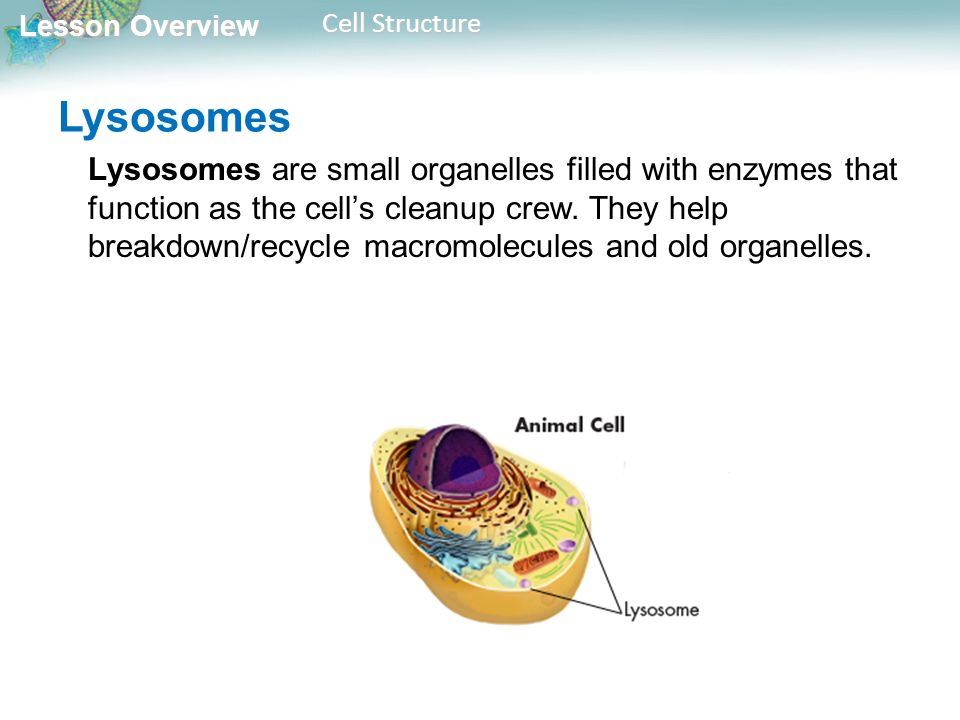 Function cell pdf and structure