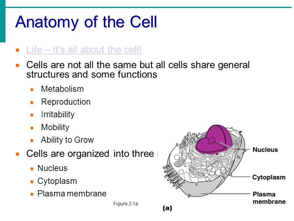 chapter 3 cells Chapter 3 cellular structure and function what is this incredible object would  it surprise you to learn that it is a human cell the image represents a cell.