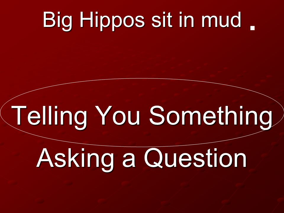 . Big Hippos sit in mud Telling You Something Asking a Question