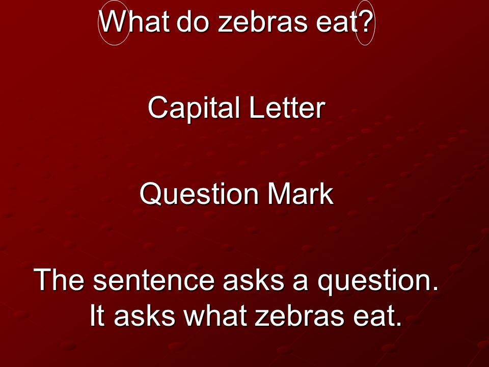 The sentence asks a question. It asks what zebras eat.