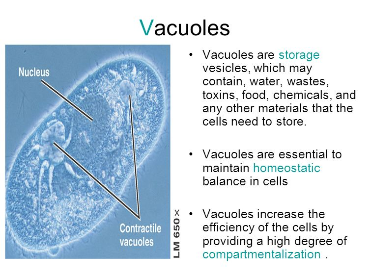 Compartmentalisation of cells