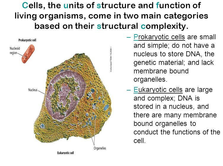 the cell structure and function Cell structure and function - smith college.