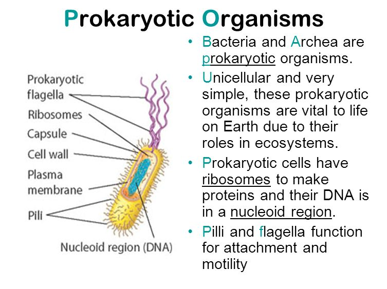 Prokaryotic Cell Structure And Function   cells structure ...  Prokaryotic Cel...