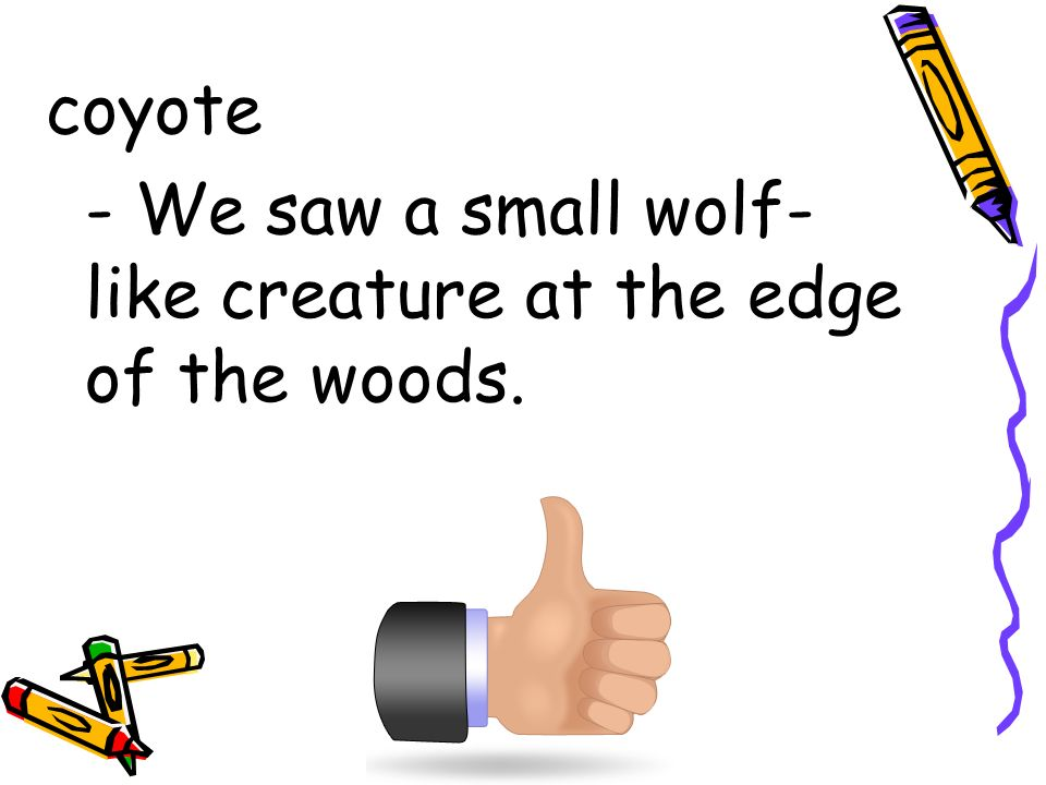 coyote - We saw a small wolf-like creature at the edge of the woods.
