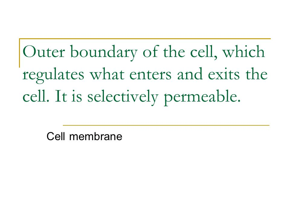 Outer boundary of the cell, which regulates what enters and exits the cell. It is selectively permeable.