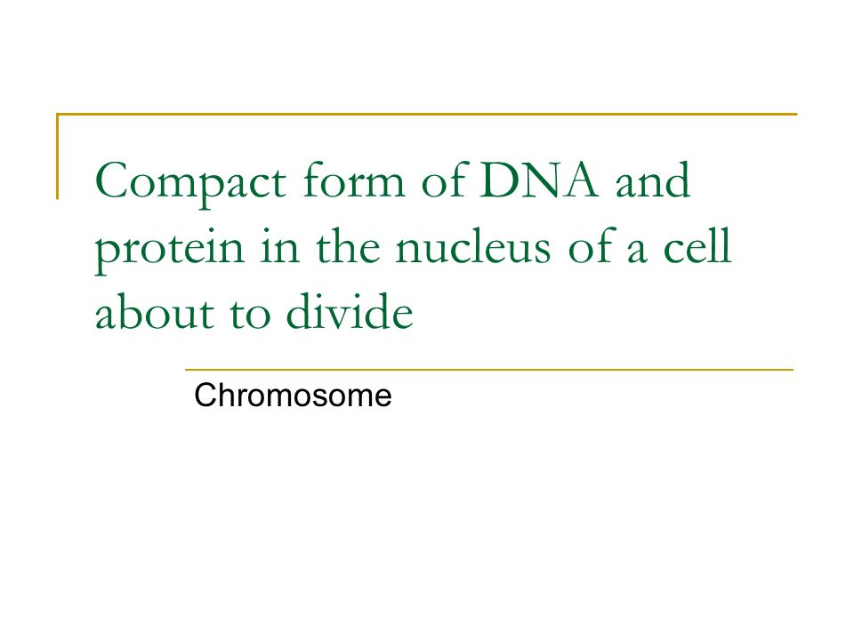 Compact form of DNA and protein in the nucleus of a cell about to divide