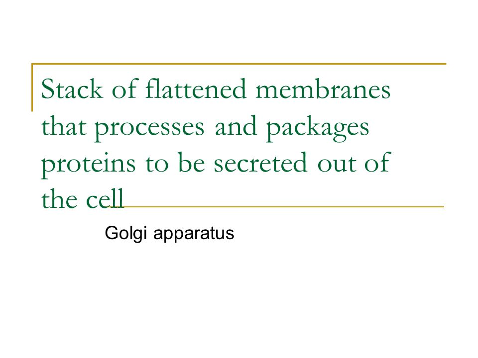 Stack of flattened membranes that processes and packages proteins to be secreted out of the cell