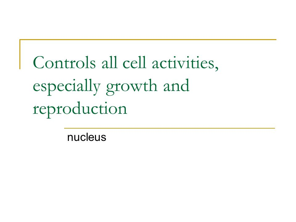 Controls all cell activities, especially growth and reproduction