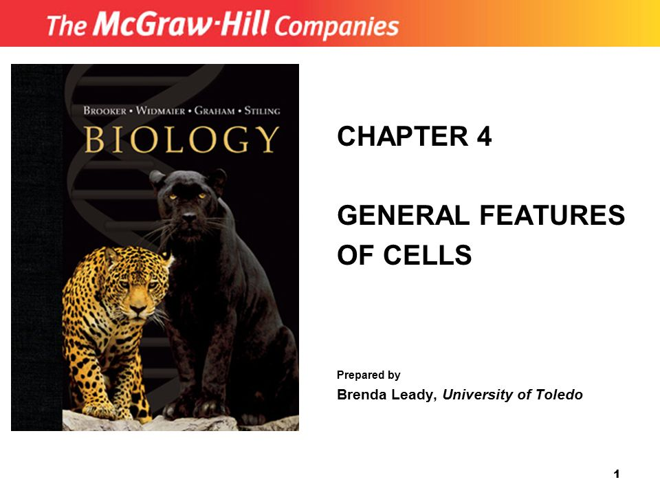 CHAPTER 4 GENERAL FEATURES OF CELLS Brenda Leady, University of Toledo