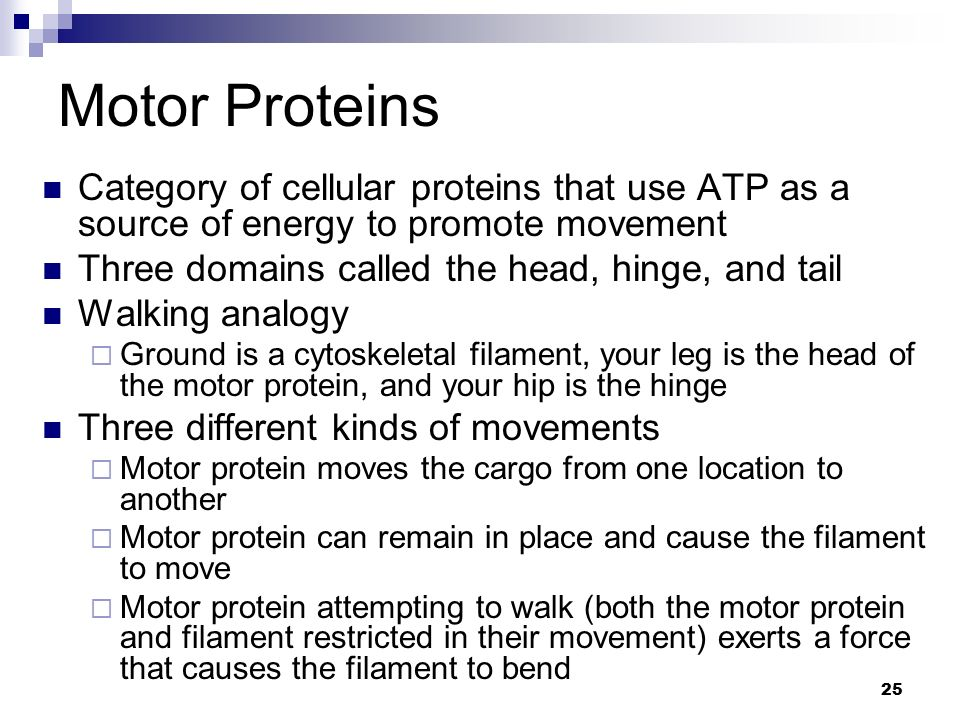 Motor Proteins Category of cellular proteins that use ATP as a source of energy to promote movement.