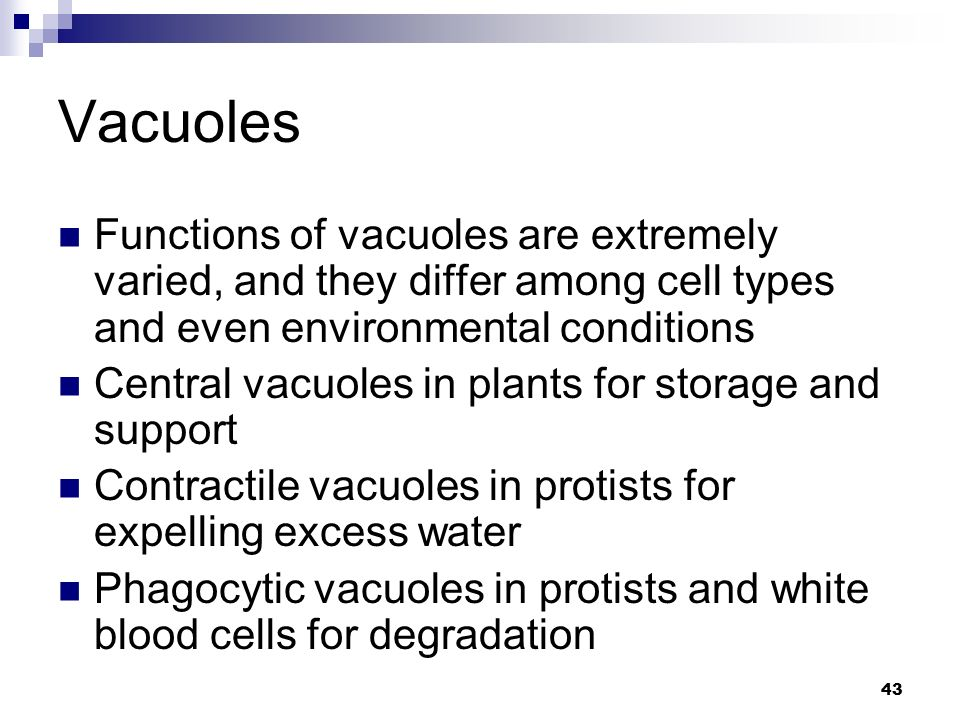 Vacuoles Functions of vacuoles are extremely varied, and they differ among cell types and even environmental conditions.