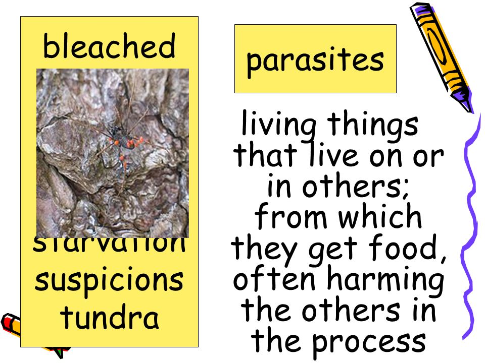 bleached carcasses. decay. parasites. scrawny. starvation. suspicions. tundra. parasites.