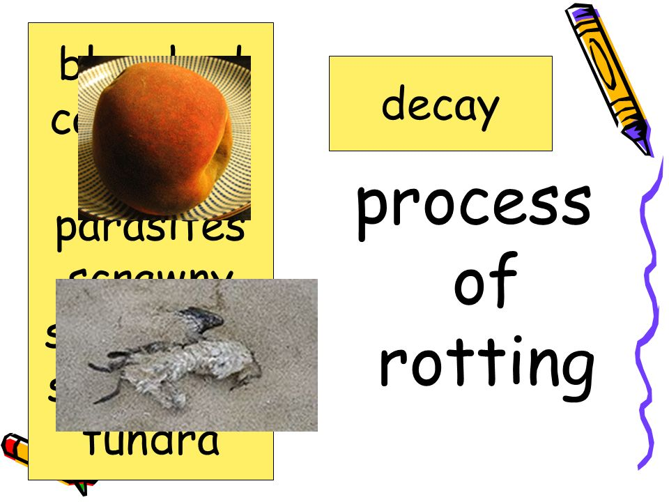 process of rotting bleached carcasses decay decay parasites scrawny
